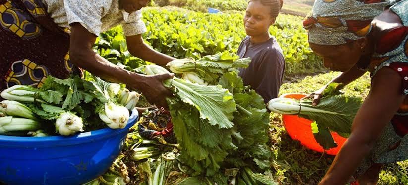 Le FAO compte soutenir 5.600 ménages pendant une durée de 12 mois en RDC