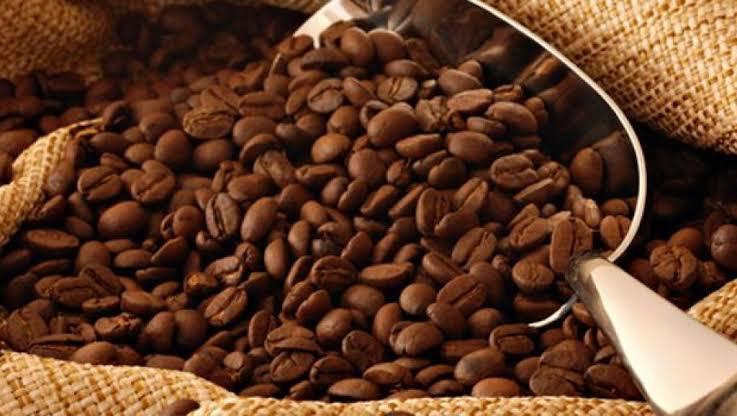 Culture Café-cacao à Béni: Les femmes en première ligne dans la commercialisation
